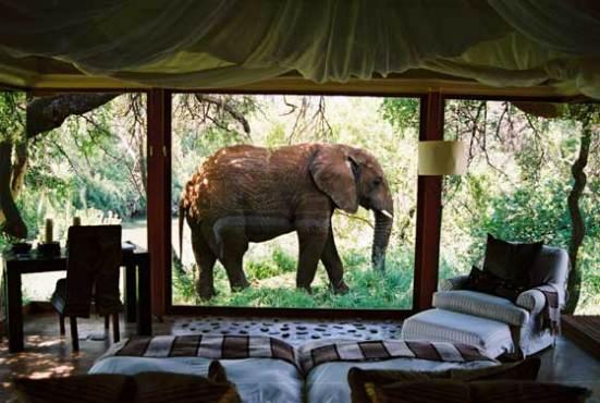 Makanyana Safari Lodge, South Africa