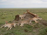 Wildlife Experiences in Africa