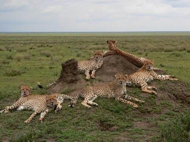 Serengeti Cheetah Project at Sanctuary Kusini