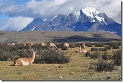 Torres del Paine, Chile 2012-03-24 040