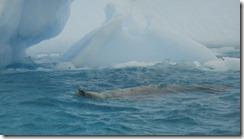 Underwater Camera 2012-03-13 054