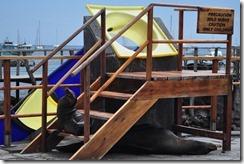 Day 1 - San Cristobal Island 2012-05-06 005a