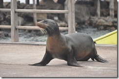 Day 1 - San Cristobal Island 2012-05-06 021