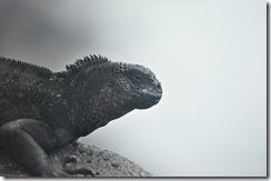 Day 1 - San Cristobal Island 2012-05-06 030