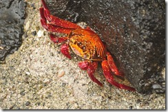 Day 1 - San Cristobal Island 2012-05-06 035