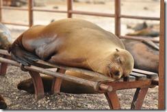 Day 1 - San Cristobal Island 2012-05-06 052