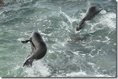 Day 1 - San Cristobal Island 2012-05-06 060