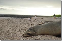 Day 1 - San Cristobal Island 2012-05-06 200