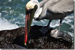 Floreana Island 2012-05-08 068