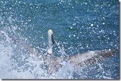 Floreana Island 2012-05-08 078
