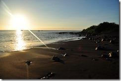 Floreana Island 2012-05-08 109