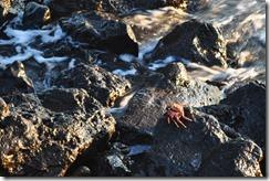 Floreana Island 2012-05-08 122