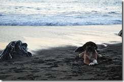Floreana Island 2012-05-08 152