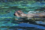 Snorkelling, sunburn and salt–a day with sealions in San Cristobal
