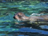 Snorkelling, sunburn and salt–a day with sealions in SanCristobal