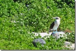 Isla del los Lobos 2012-05-07 026