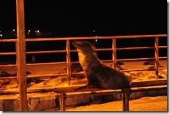 Port at night 2012-05-06 004